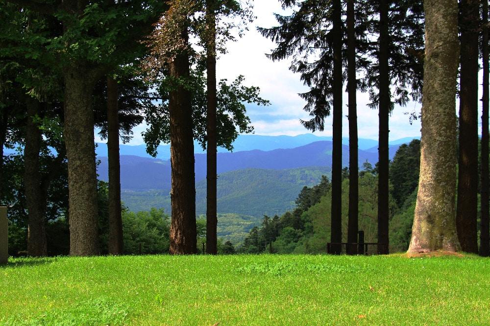 Villa-Mathis-paysage